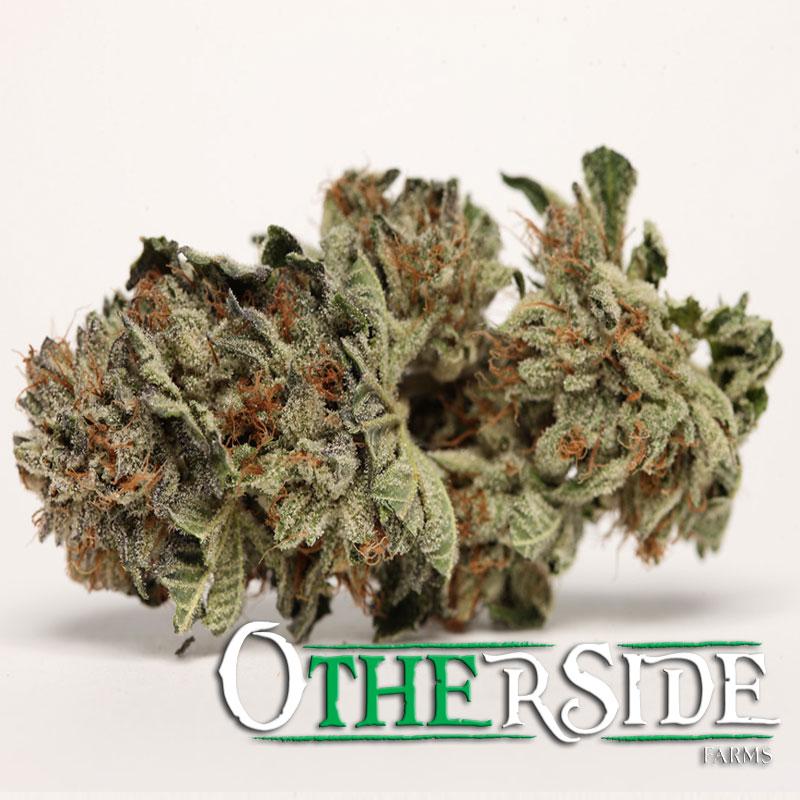 Olivia1 Olivia Kush #marijuana #cannabis
