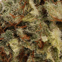 White Widow21 White Widow #marijuana #cannabis