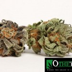 223674 247726205255349 2140299 n 150x150 Blueberry Kush #marijuana #cannabis