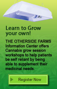 grow your own1 Cannabis Sativa