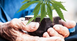 wsi-imageoptim-medical-cannabis-for-the-elderly-www.endoca.com_[1]