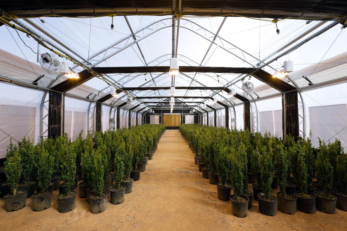 Diy Indoor Greenhouse Grow Lights