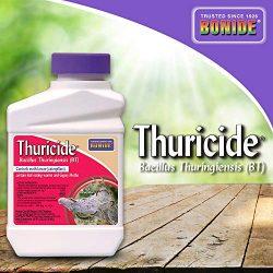 Bonide (BND803) – Leaf Eating Worm & Moth Killer, Thuricide Bacillus Thuringiensis (Bt) Outdoor Insecticide/Pesticide Liquid Concentrate (16 oz.)